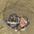 Nestlings in burrow